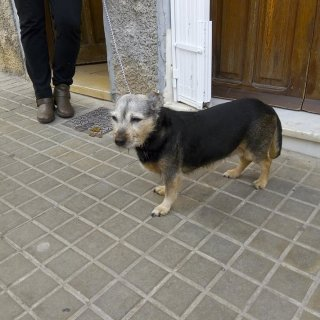Estrella: Adopted, Dog - Mestiza, Female
