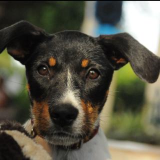 KIWI: For adoption, Dog - ., Male
