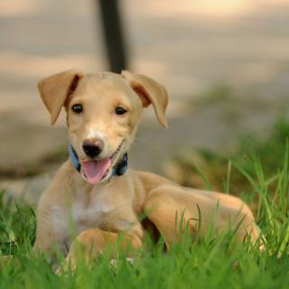 NIKO: For adoption, Dog - ., Male