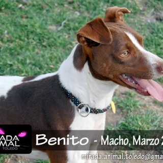 Benito: For adoption, Dog - ., Male