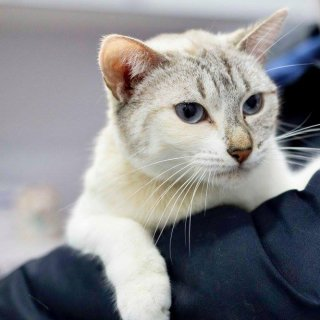 Mimi: For adoption, Cat - ., Female