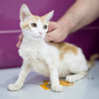 Rita: For adoption, Cat - ., Female