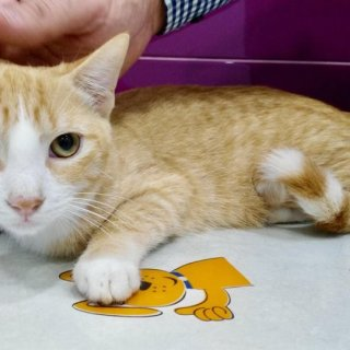 Tigrin: For adoption, Cat - ., Male