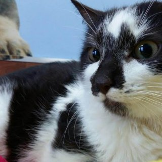 Puzzle: For adoption, Cat - ., Male
