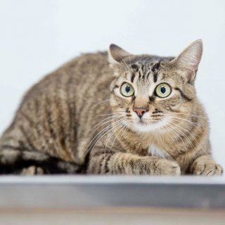 Penny: For adoption, Cat - ., Female