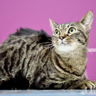 Irka: For adoption, Cat - ., Female