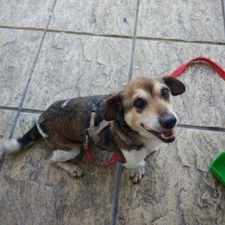 Tildus: For adoption, Dog - Mestizo, Male