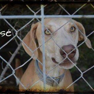 José: Adopted, Dog - Mestizo mediano, Male