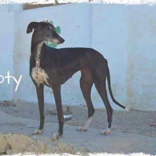 Boty: Adopted, Dog - Galga, Male