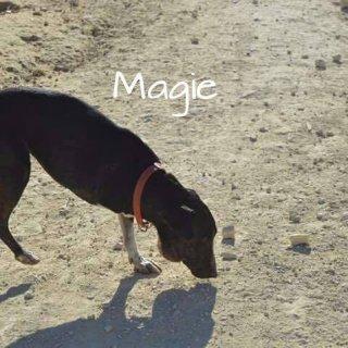 Magie: For adoption, Dog - Mestiza pequeña, Female