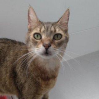 Otsan: For adoption, Cat - Común europeo, Male