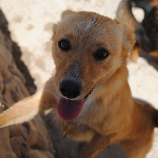 Clarita: For adoption, Dog - Mestiza, Female