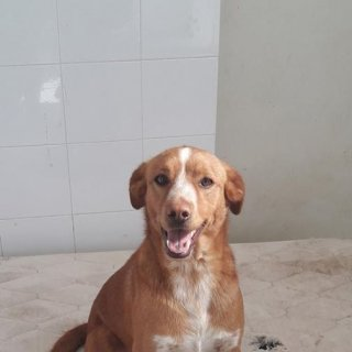 Lucero: For adoption, Dog - ., Male