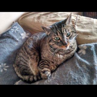 Jony: For adoption, Cat - Europea, Male