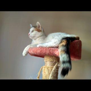Nela: For adoption, Cat - Europea, Female