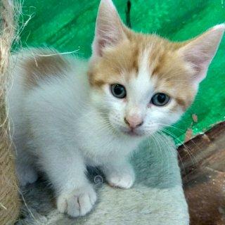 Robledo: For adoption, Cat - Europea, Male