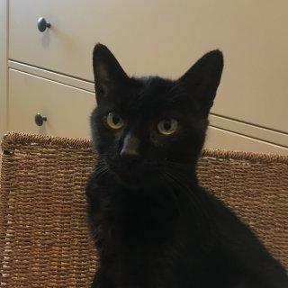 LUNA: Lost, Cat - Negro, Male