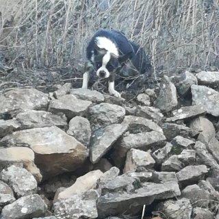 Avistamiento: Sighting, Dog - Desconocido, Unknown