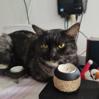 zooba: Lost, Cat - curze, Female